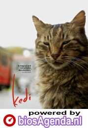Kedi poster, © 2016 Cinema Delicatessen