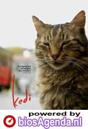 Kedi poster, © 2016 Cinema Delicatessen