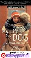 Poster 'My Life as a Dog' (c) 1986